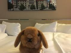 Maskottchen Editha im Hotelzimmer des H+Hotel