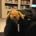 Maskottchen Editha in der Reisetasche